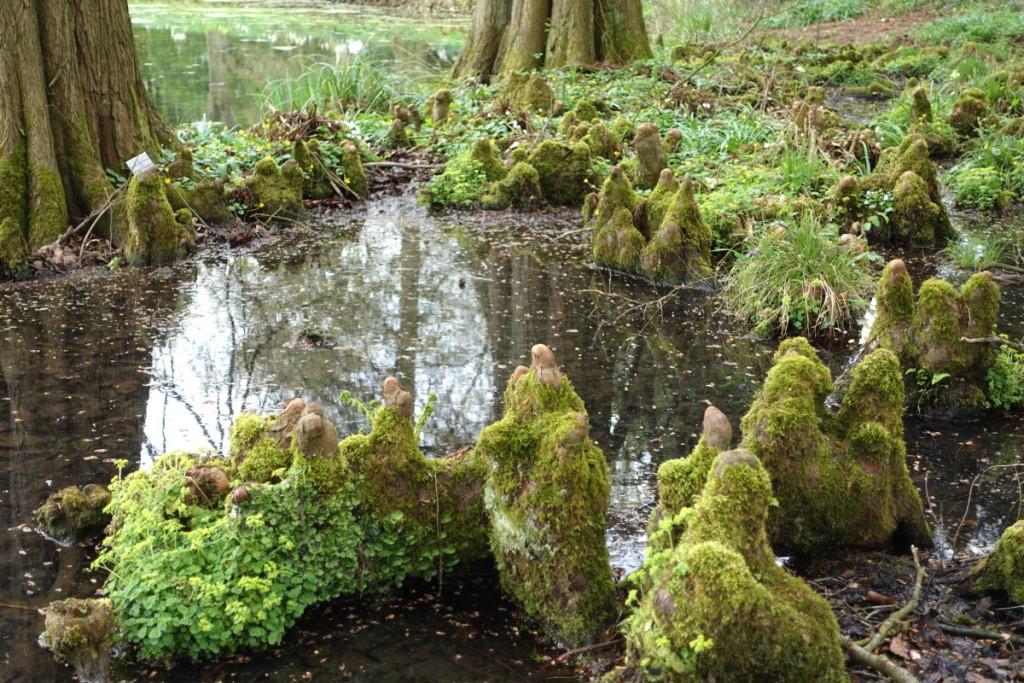 Bild:Botanischer Garten Münster Wurzelkreis