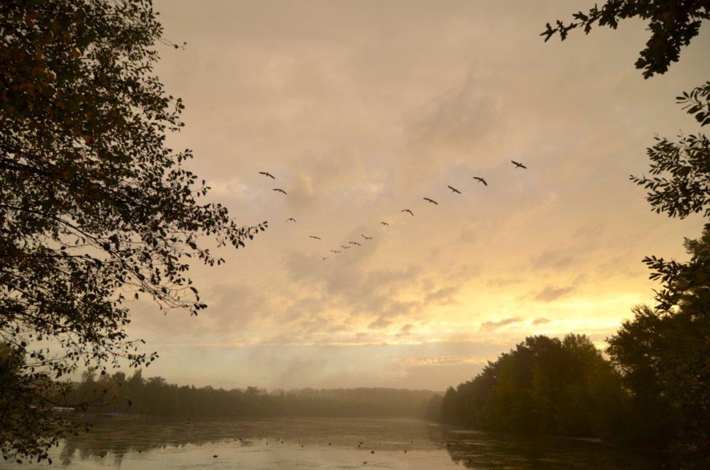 Bild: Vogelzug Münster Pausenblicke Süden Sommer Winter