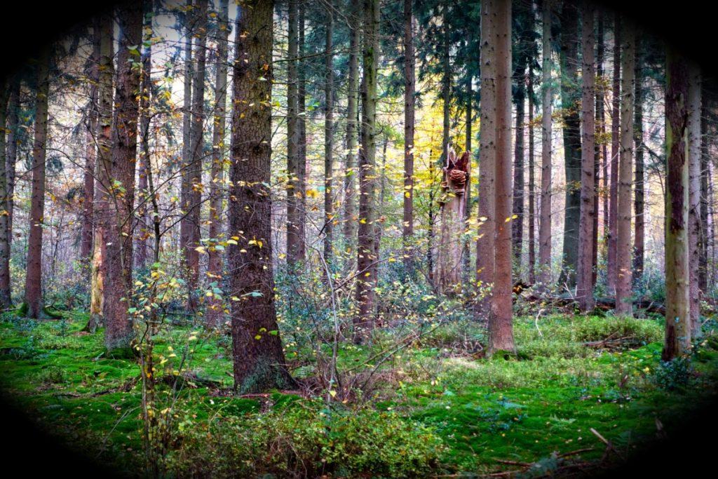 Bild: Zauberwald Pausenblicke Münsterland Herbst